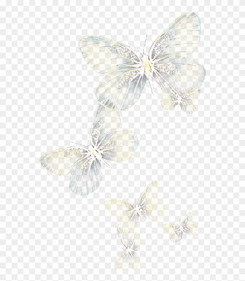 Ftestickers Butterflies Light Glowing Pieridae Hd Png Download 1024x1024 2616068 Pngfind