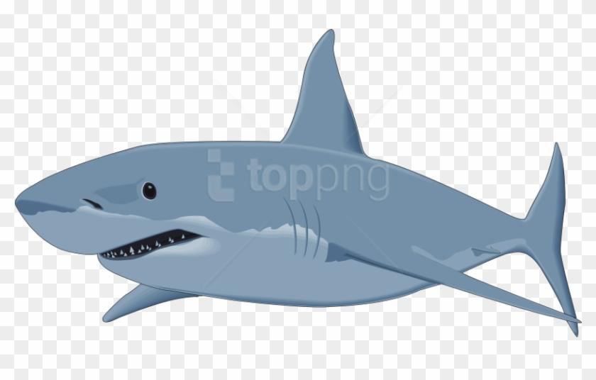 Shark transparent background. Free png download image