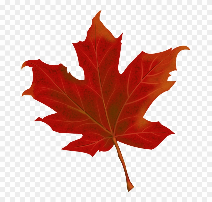 Red Leaves Fall 4k Red Maple Leaf Png Transparent Png 669x720 2770576 Pngfind
