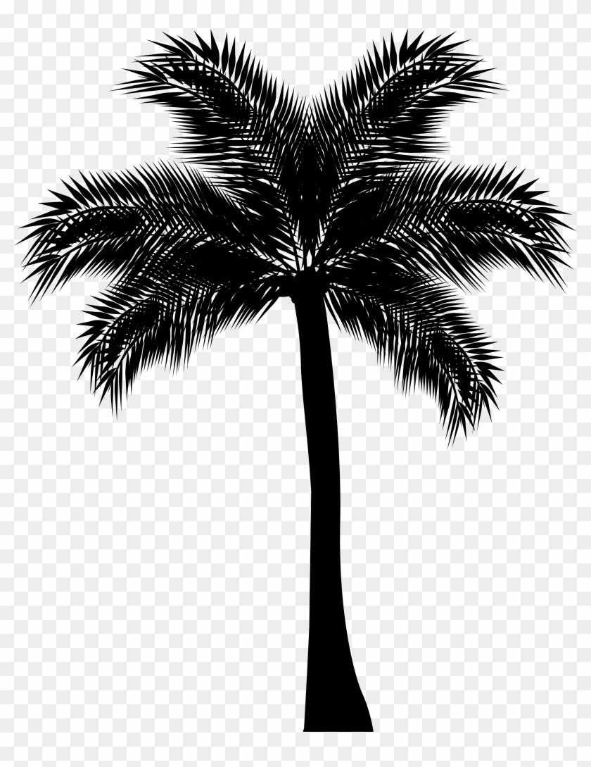 Image Library Library Palm Tree Black And White Clipart Hd Png