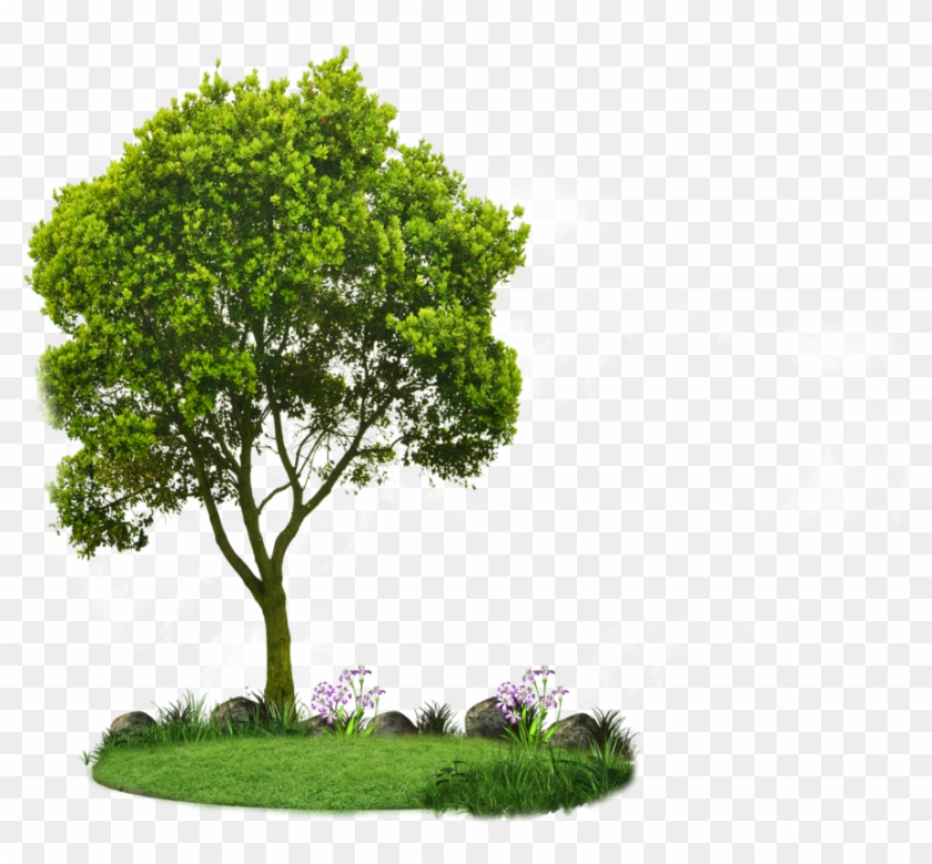 Plan View Tree Clipart - Clipart Small Trees, HD Png