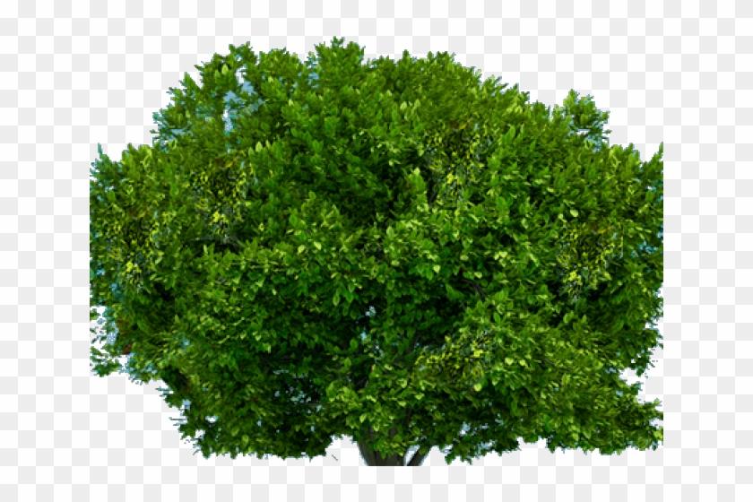 Bushes Clipart Tree Top - Bush Transparent Background, HD