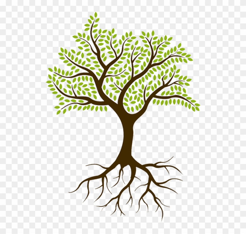 Tree With Roots No Background Hd Png Download 528x719 2949044