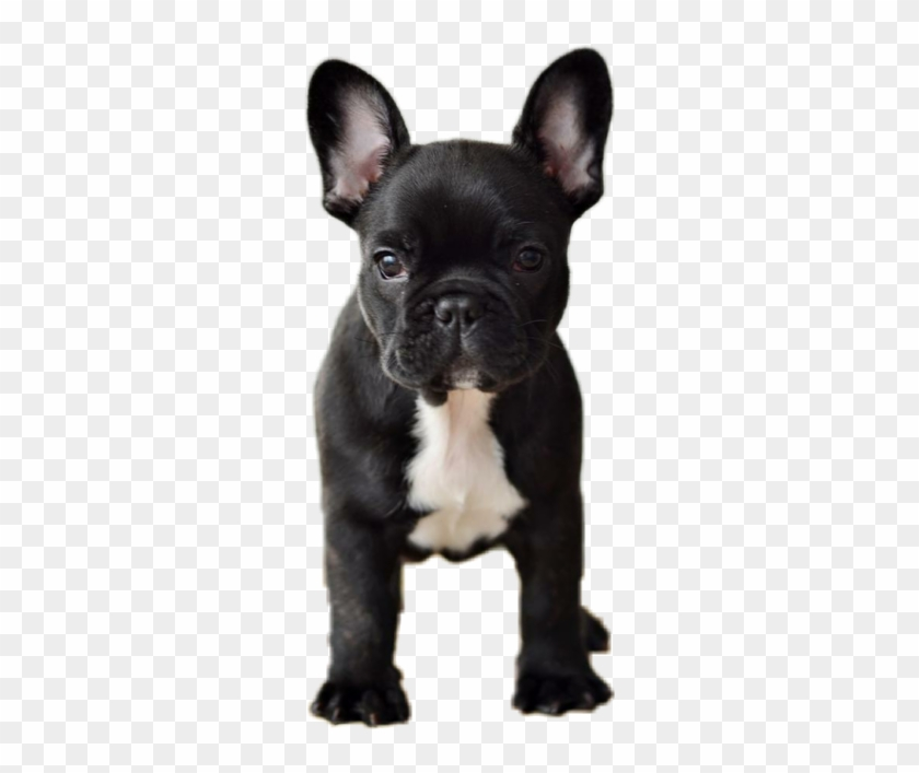 Dog Animals Pets Frenchie Frenchy Frenchbulldog Grayson Dolan With Dogs Hd Png Download 604x640 3049599 Pngfind