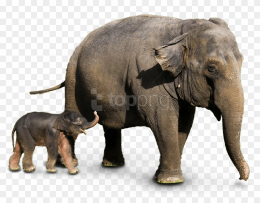 Free Png Download Elephant Png Images Background Png Asian Elephant Png Transparent Png 850x626 3078011 Pngfind All images is transparent background and free download. free png download elephant png images