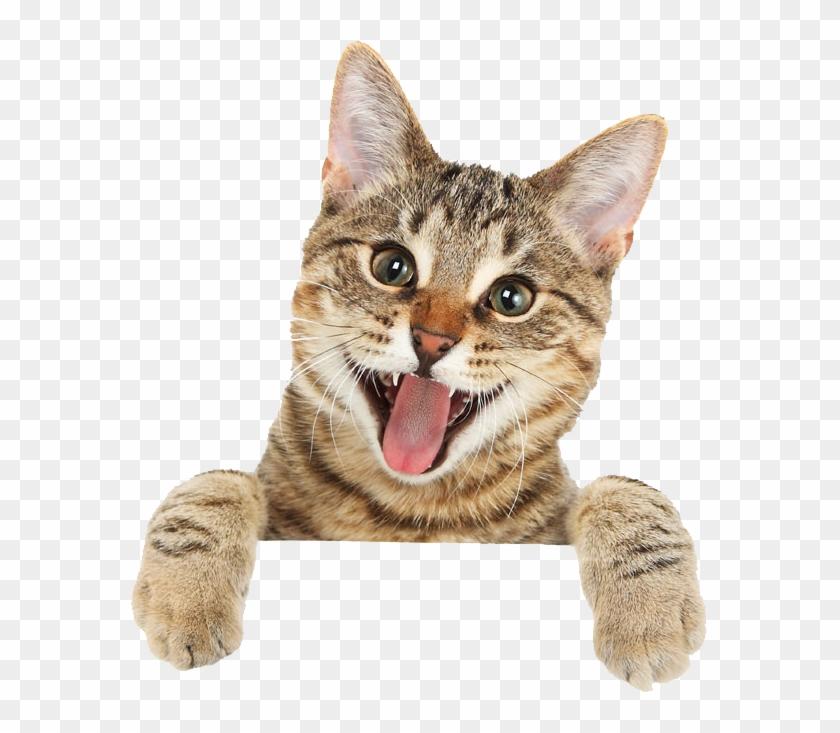 Cat Png Free Download Cute Cat Png Transparent Png 579x653 3116406 Pngfind