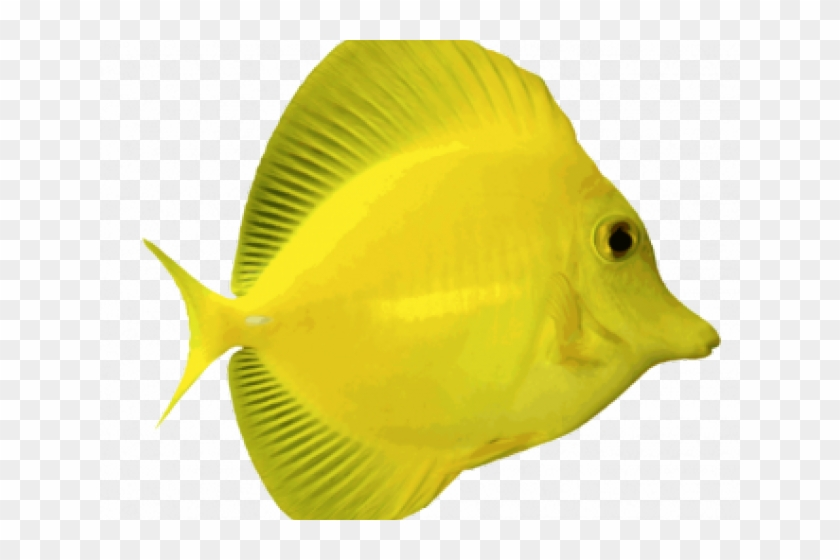 Fish Clipart Transparent Background Yellow Tang Fish Png Png Download 640x480 3137810 Pngfind