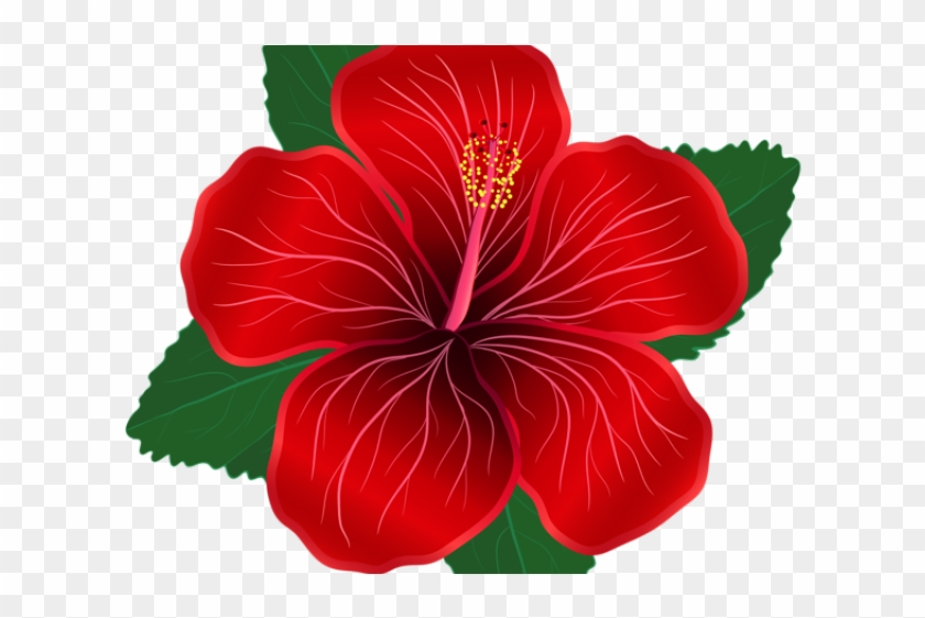 Hibiscus Clipart Shoeflower Red Hibiscus Flower Png Transparent