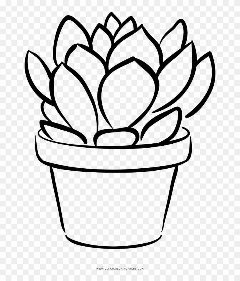 Succulent Coloring Page Succulent Png Coloring Transparent Png 1000x1000 3255331 Pngfind