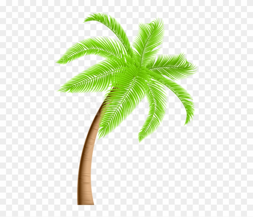 Free Png Download Palm Tree Png Png Images Background Clipart Palm
