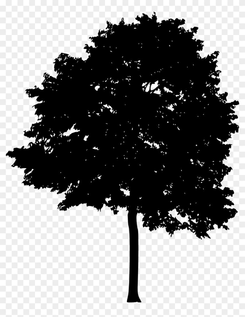 Free Download Plane Tree Family Hd Png Download 962x1200 353031 Pngfind