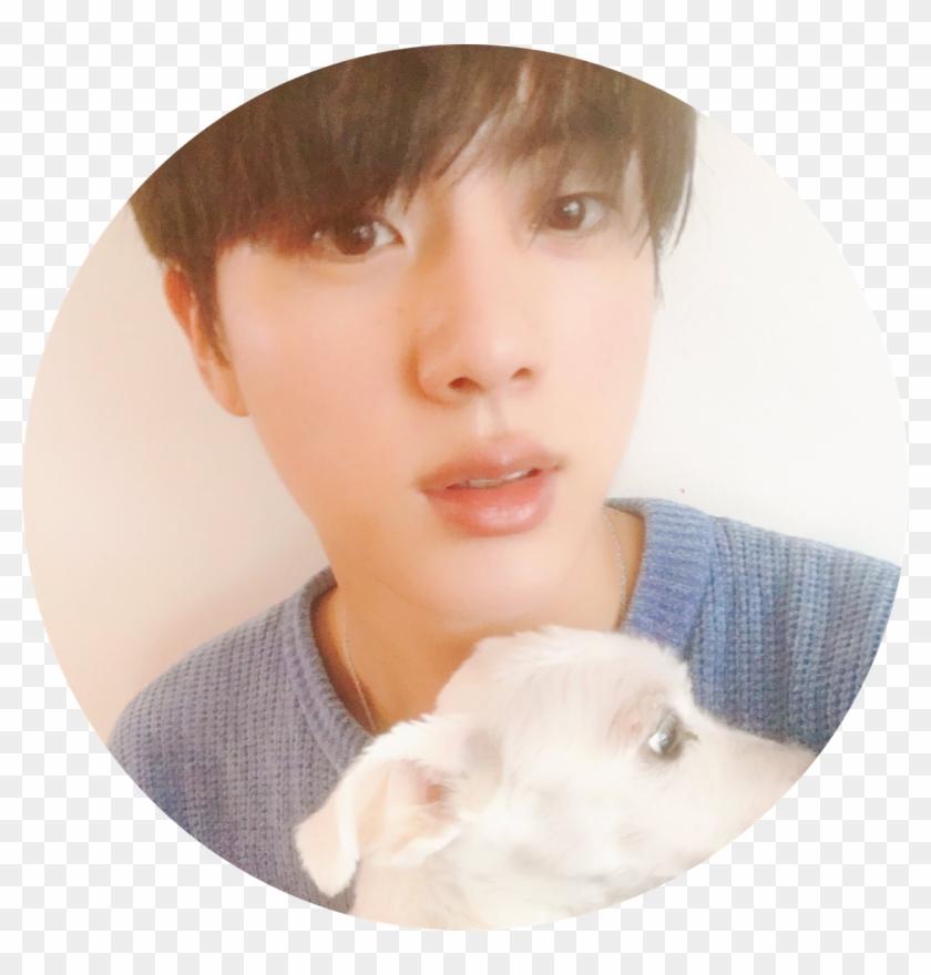 Jin Bts Tumblr Kim Seokjin Dog Hd Png Download 1280x1280 3517619 Pngfind