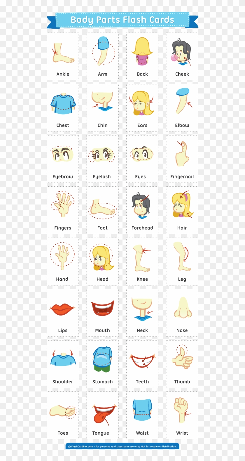 Body Parts Flash Cards , Png Download - Easter Activities