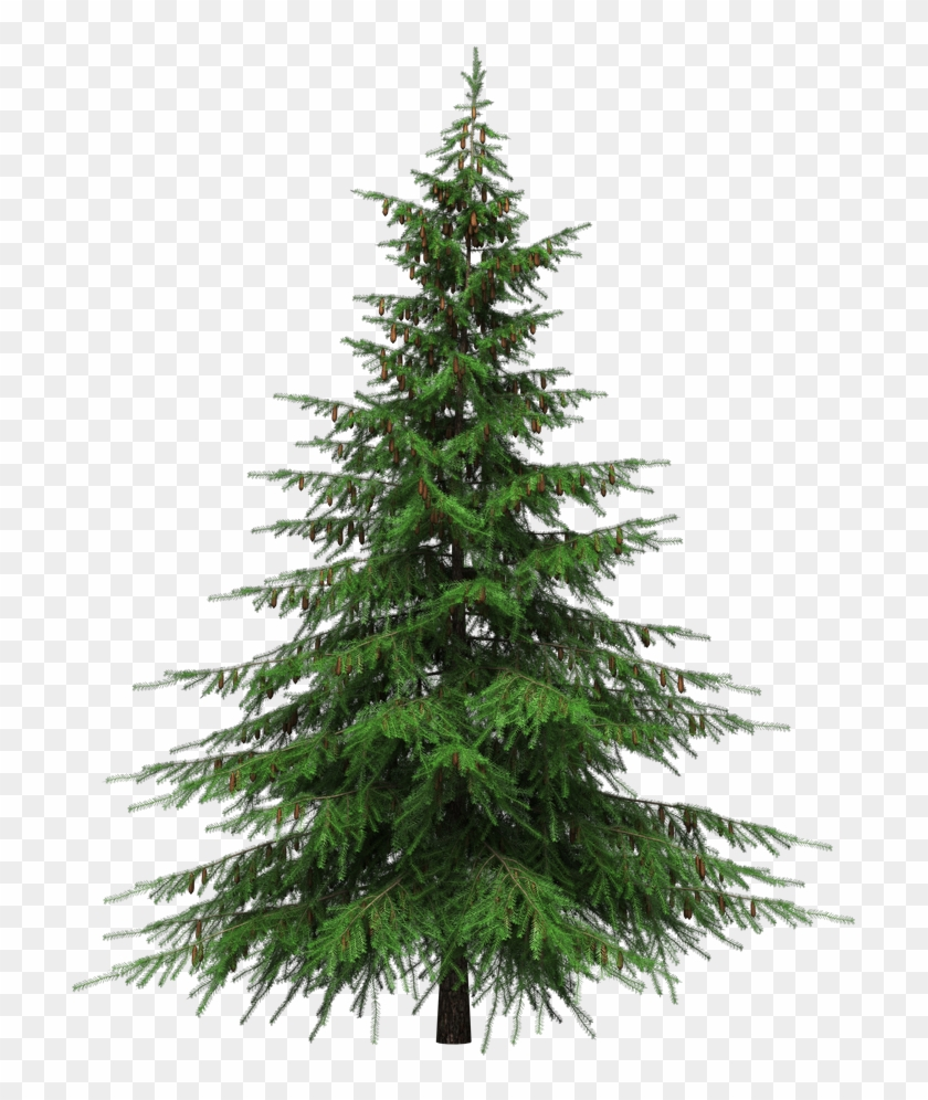 Christmas Tree Transparent Christmas Tree No Background Hd Png