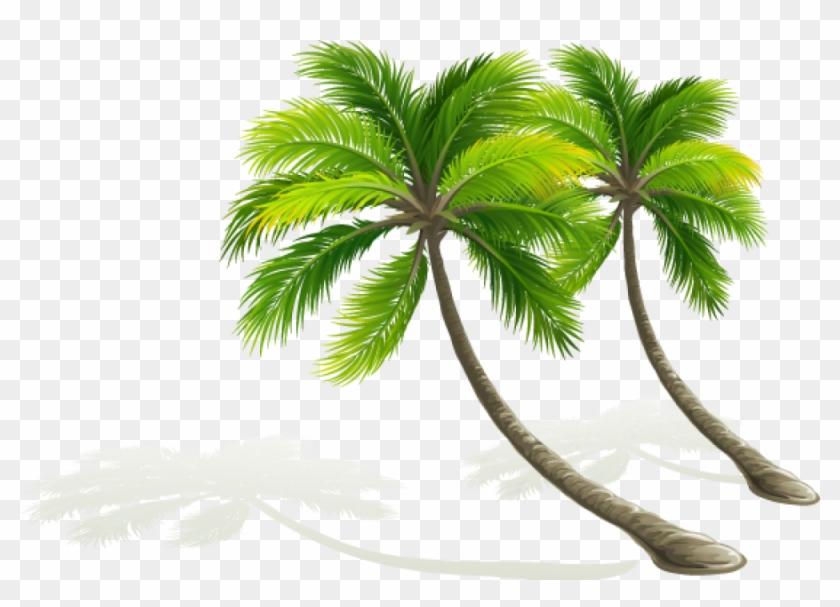 Palmera Dibujo Png Coconut Tree Vector Transparent Arvores