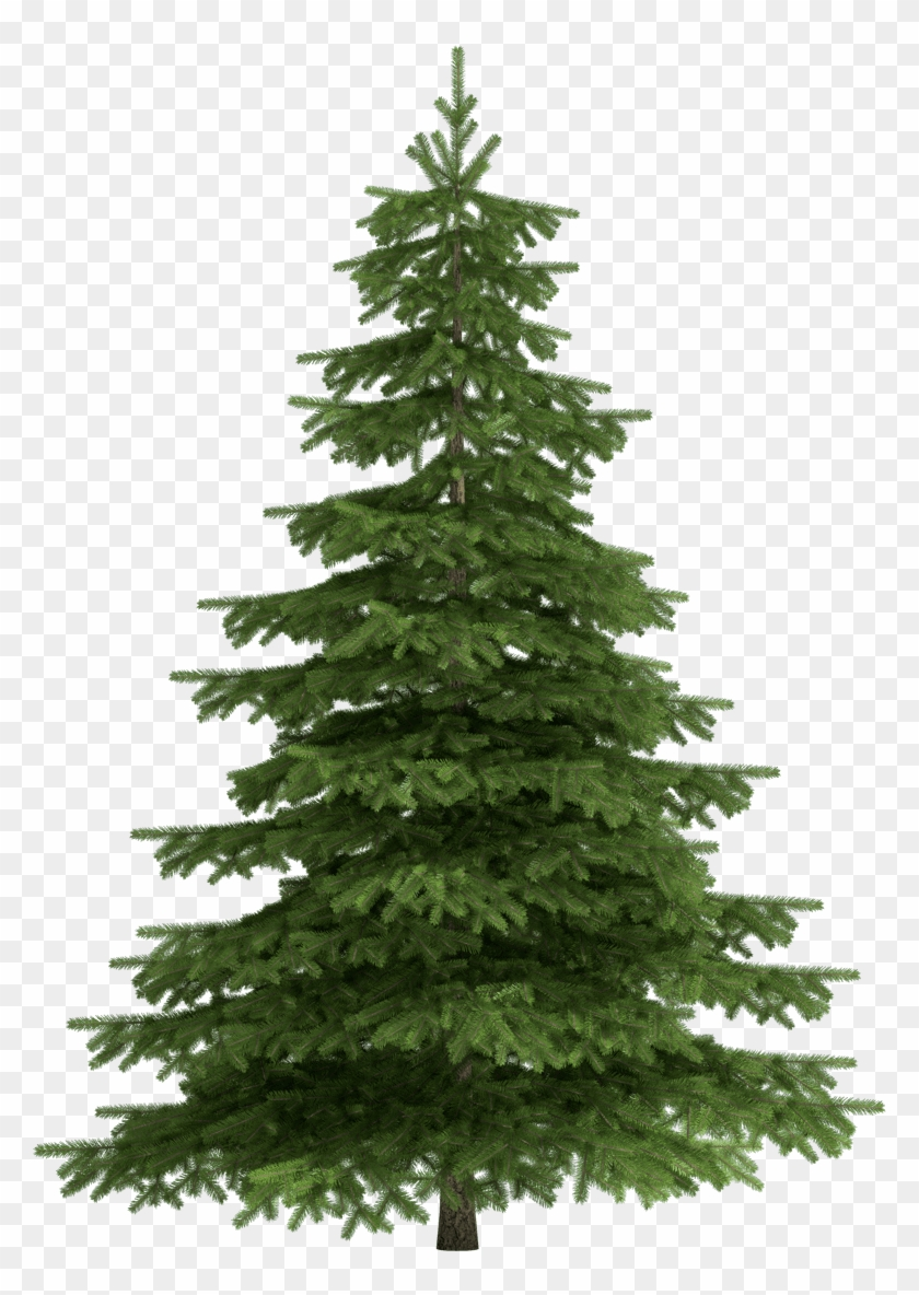 Christmas Trees Png.Christmas Trees Transparent Pine Tree Png Png Download