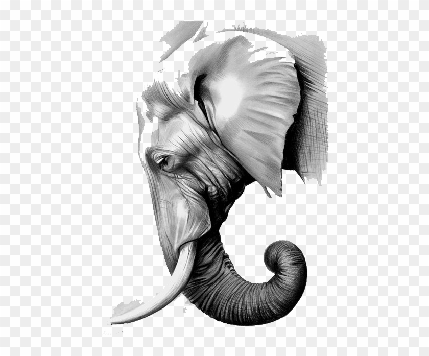 Graphic Black And White Library The Elephants Paper Asian Elephant Head Drawing Hd Png Download 564x730 3813488 Pngfind When designing a new logo you can be inspired by the visual logos found here. asian elephant head drawing hd png