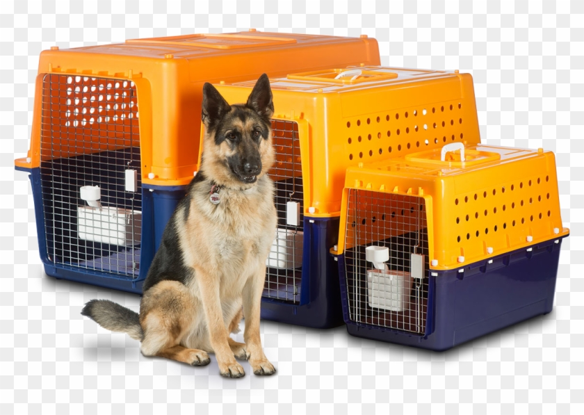 Airline Roved Dog Crates Nz