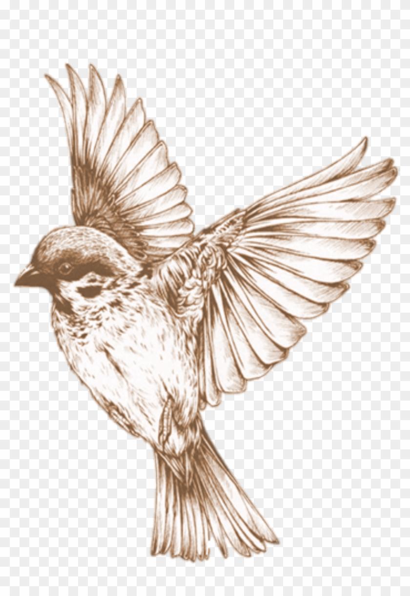 Education Photos Stockkite Bird Element Ⓒ - Flying Bird