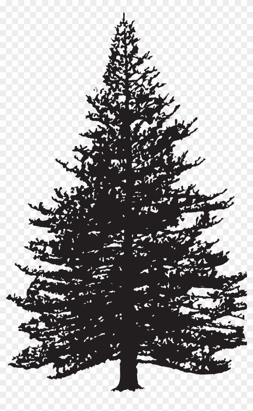 Pine Tree Silhouette Clip Art Image Pine Tree Silhouette Png Transparent Png 5074x8000 47506 Pngfind