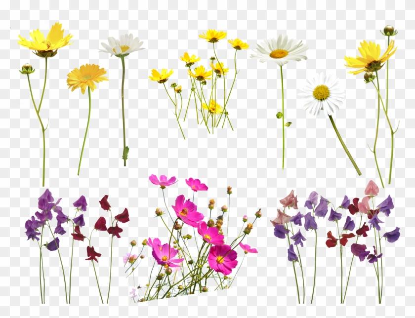 Flower Overlay Png Transparent Background - Photoshop Flower Overlay
