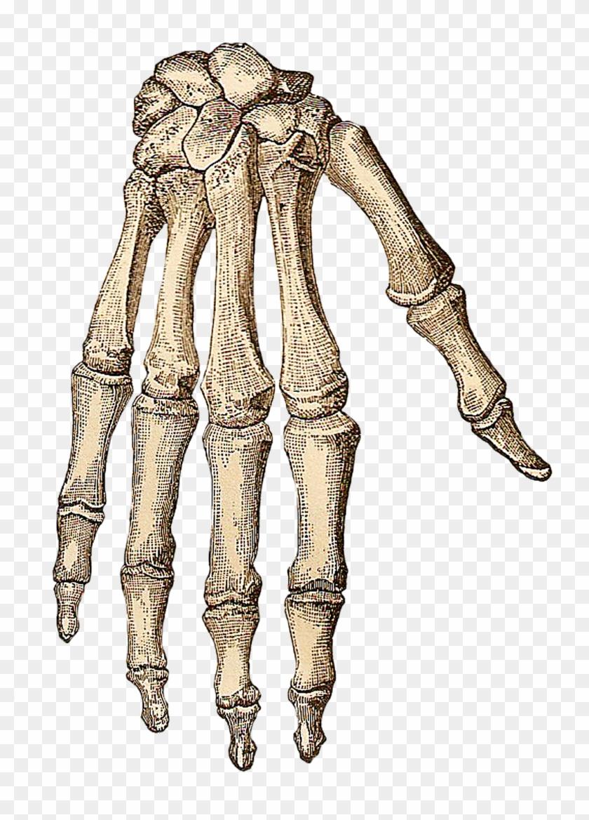 Halloween Vintage Clipart.Vintage Halloween Clip Art Transparent Skeleton Hand Png Png