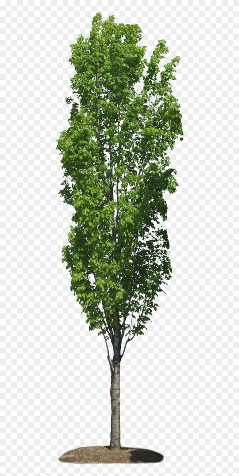 Png Arbres Bushes And Trees Cut Out Transparent Png 460x1600