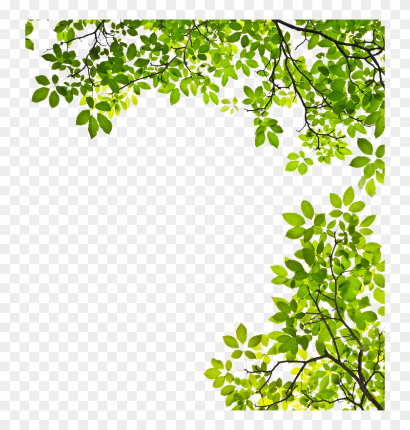 Feuille Arbre Png Tree Branches With Leaves Clipart Transparent Png 736x800 4266932 Pngfind