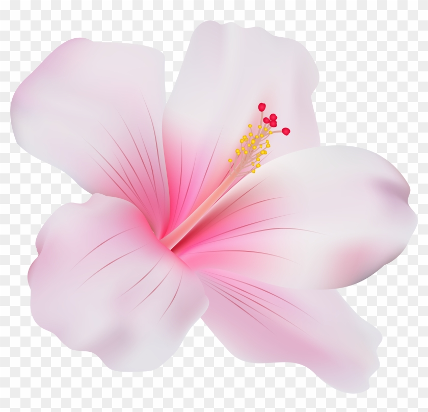 Pink Hibiscus Png Clip Art Pink Hibiscus Flower Png Transparent