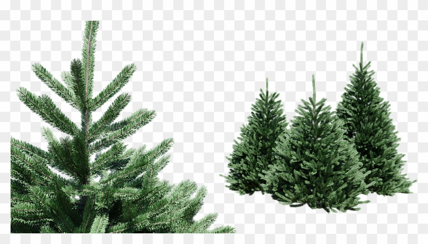 Christmas Trees Png.Spruce Picea Set Of 4 Trees Png Download Christmas Tree