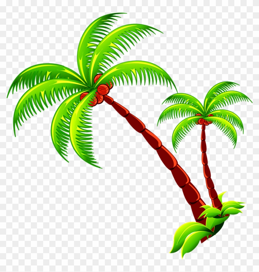Coconut Tree Branch Free Photo Png Clipart Coconut Transparent