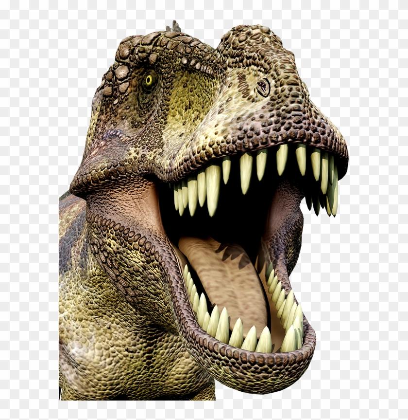 Dinosaurios Hd Png Download 618x800 4648834 Pngfind Elige el tuyo en nuestra selección de dinosaurios de juguete de marketlace, y adentrarte en un mundo diferente donde gallimimus y brachiosaurus conviven con estegosaurios, el plesiosaurio y el. dinosaurios hd png download 618x800