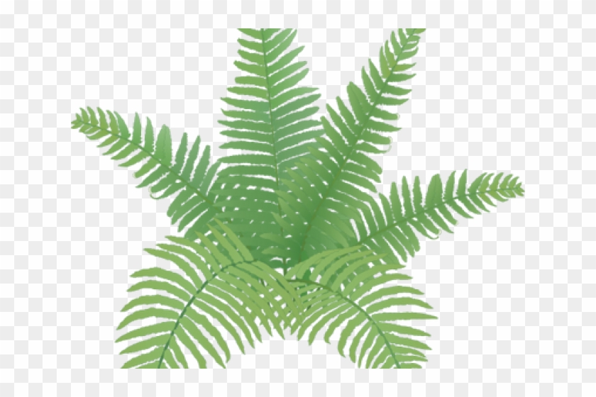 Fern Clipart Simple - Easy Fern Plant Drawing, HD Png