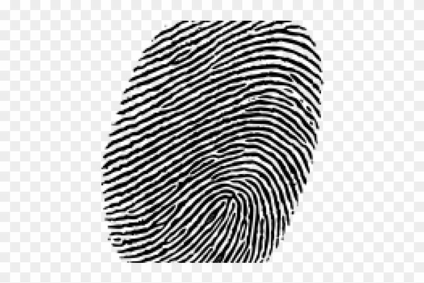 Fingerprint, HD Png Download - 640x480(#475009) - PngFind