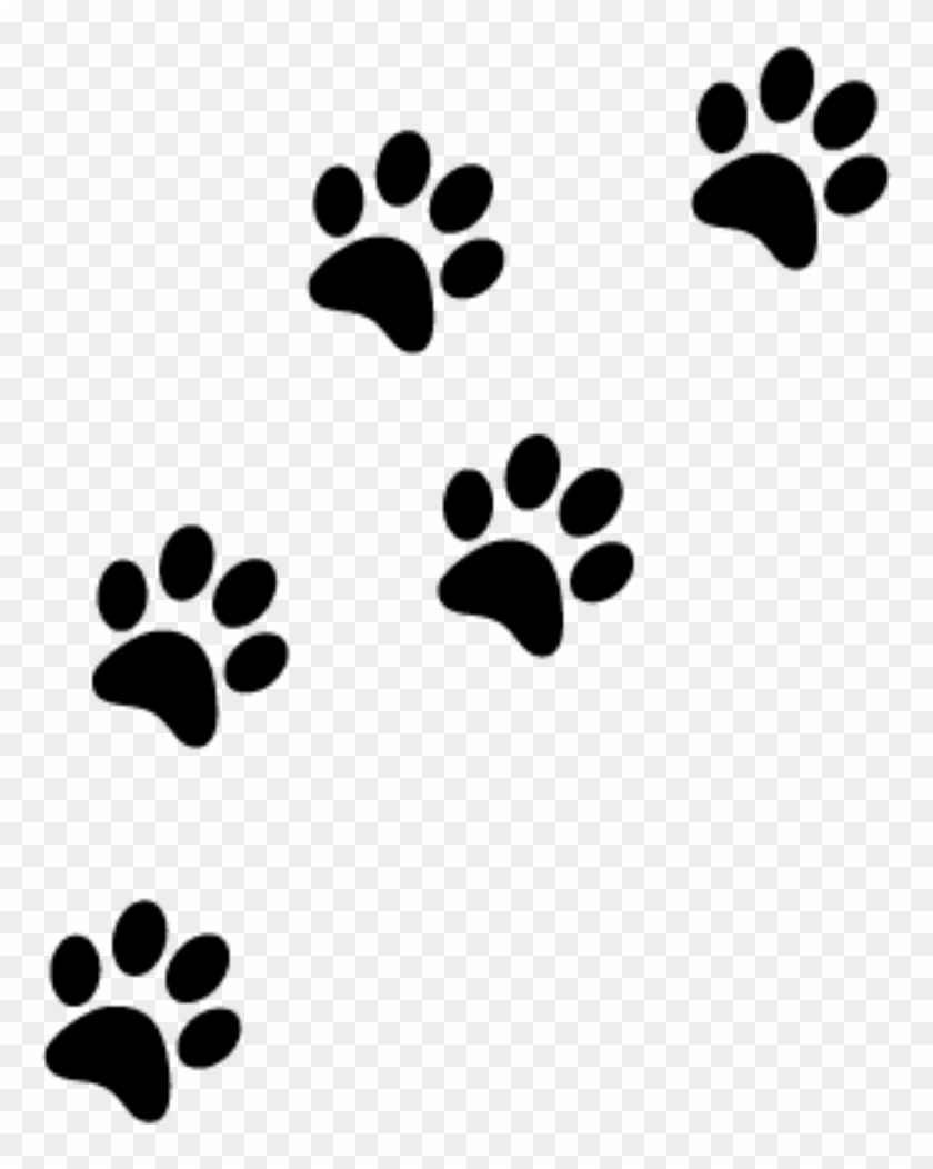 233 Cat Paws Png Transparent Png 800x1053 4766982 Pngfind Use it in your personal projects or share it as a cool sticker on tumblr, whatsapp, facebook messenger, wechat, twitter or in other messaging apps. 233 cat paws png transparent png