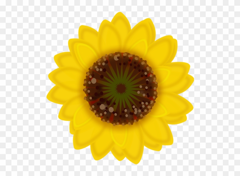 Drawing Sunflowers Daisy Yellow Small Flower Png Transparent Png