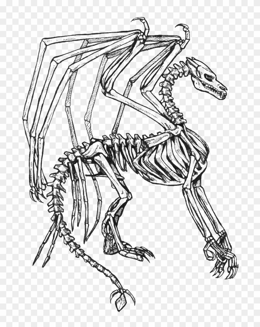 Skeleton Bone Dragon Coloring Pages Skeleton Dragon Coloring Page Hd Png Download 700x976 4846404 Pngfind