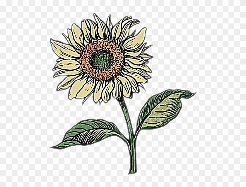 Sunflower Drawing Doodle Flower Aesthetic