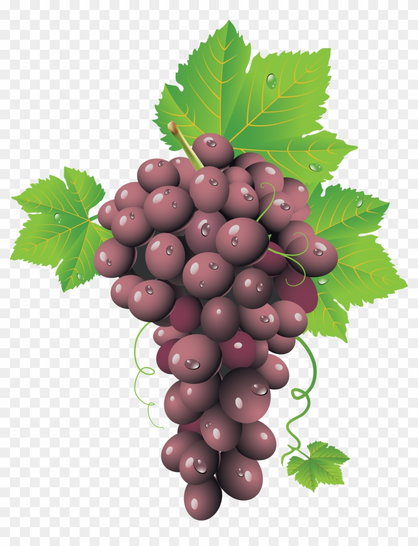 Grape Clipart Transparent Background Free Vector Wine