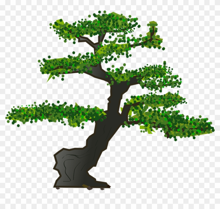 Bonsai Tree Leaves Plant Nature Karate Kid Bonsai Tree Logo Hd Png Download 836x720 5055488 Pngfind