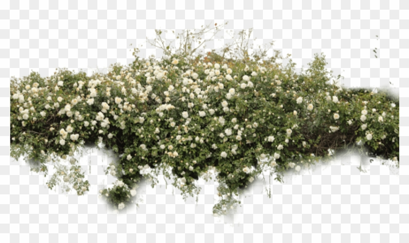 Free Png Download Bushes Free Png Images Background