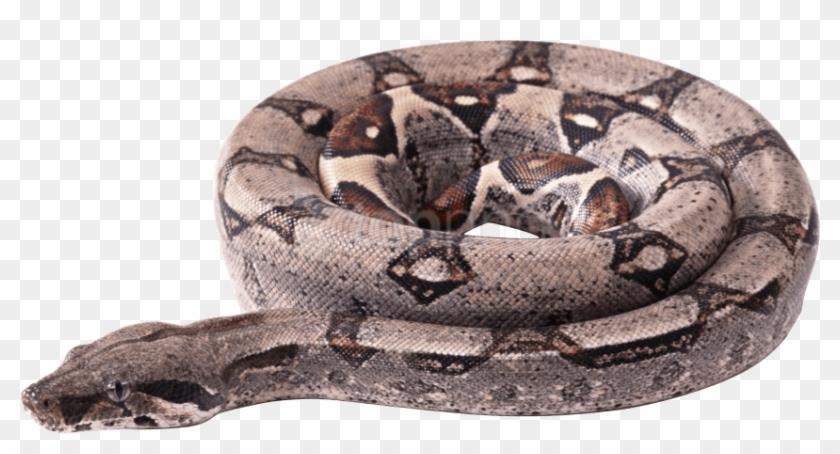 Brown Rattle Snake Clip Art at Clker.com - vector clip art online, royalty  free & public domain