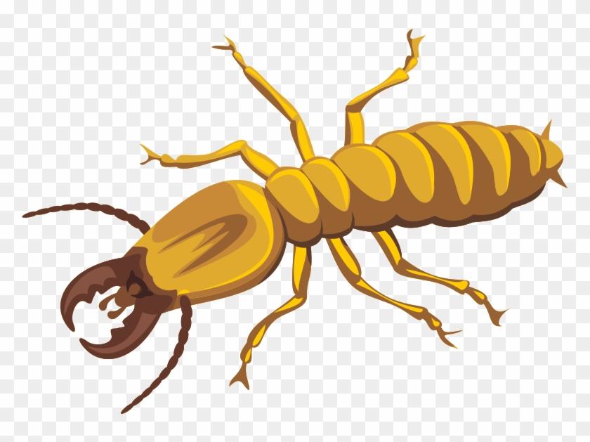 Termite Png Photos Termites Cartoon Transparent Png 913x642 5319754 Pngfind