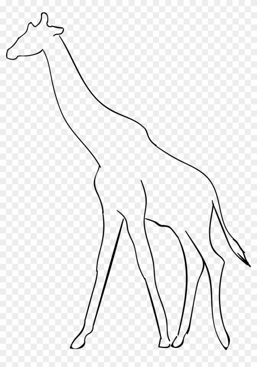 Giraffeanimalthe Of A Giraffe Silueta Jirafa Para Colorear Hd