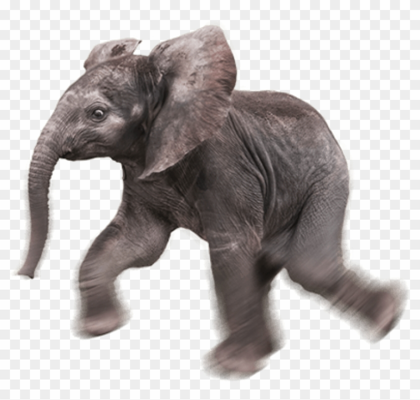 Free Png Download Elephant Png Images Background Png Baby Elephant Transparent Background Png Download 850x771 569221 Pngfind Thousands of new elephant png image resources are added every day. free png download elephant png images