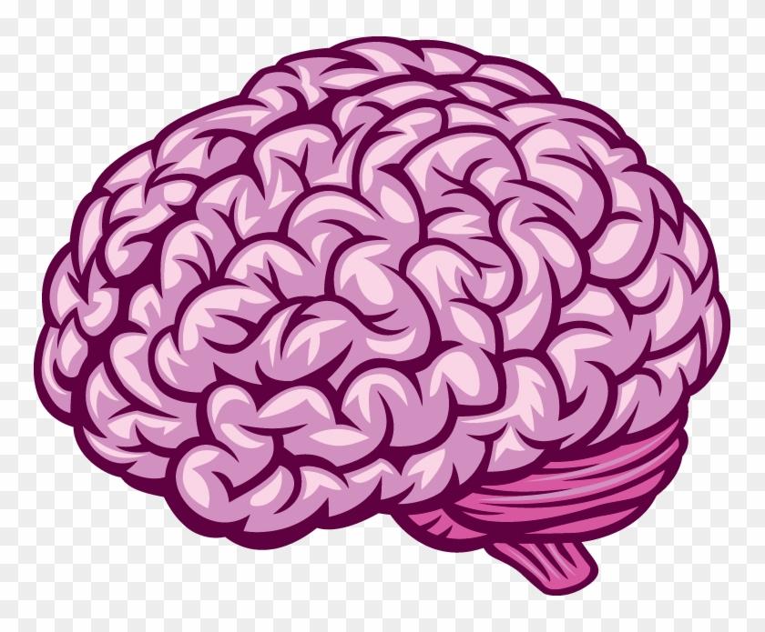 Human Brain - Brain Vector, HD Png Download - 765x615 ...