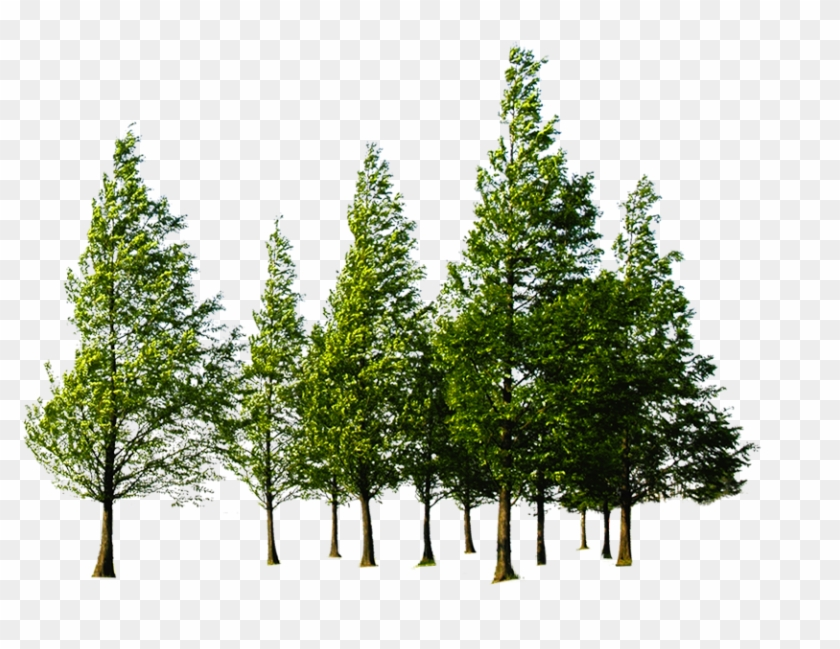 Forest High Quality Png - Trees Png, Transparent Png