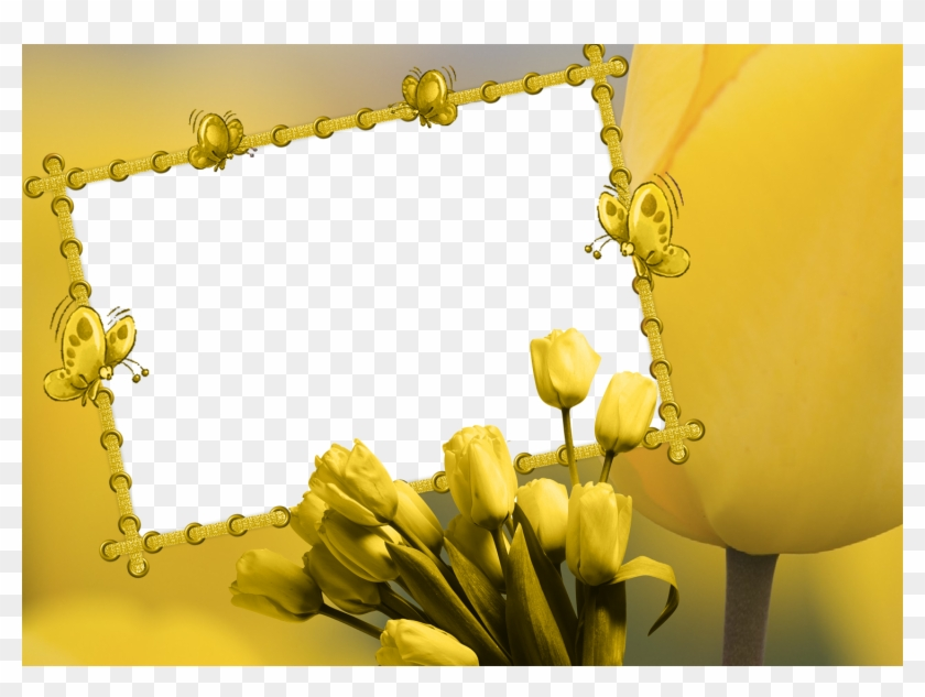 Cute Frames, Frame Background, Yellow Tulips, Borders, HD
