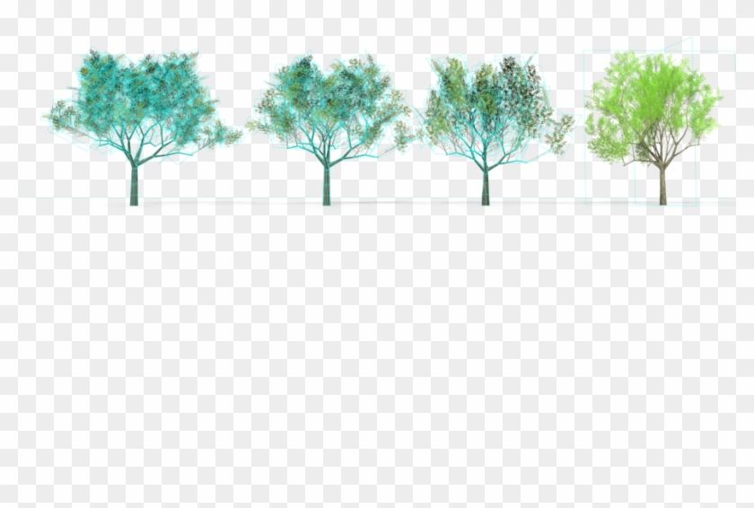 6 Eucalyptus Crebra Tree Royalty-free 3d Model - Mexican Pinyon, HD