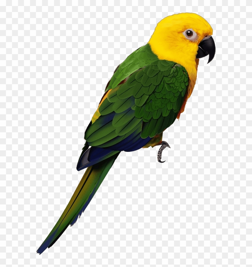 Parrot Png Cartoon - Картинка Попугая На Белом Фоне